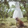 Ljubimci na venčanju